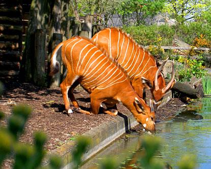 uk-london-zoo