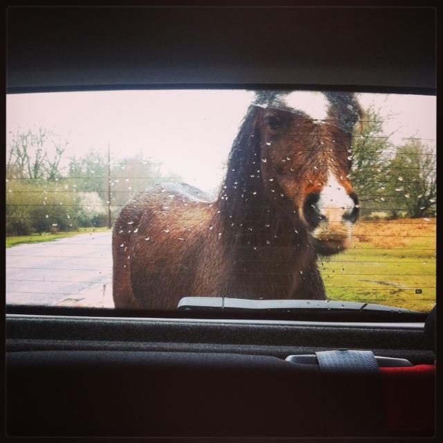 Cavallo curioso!