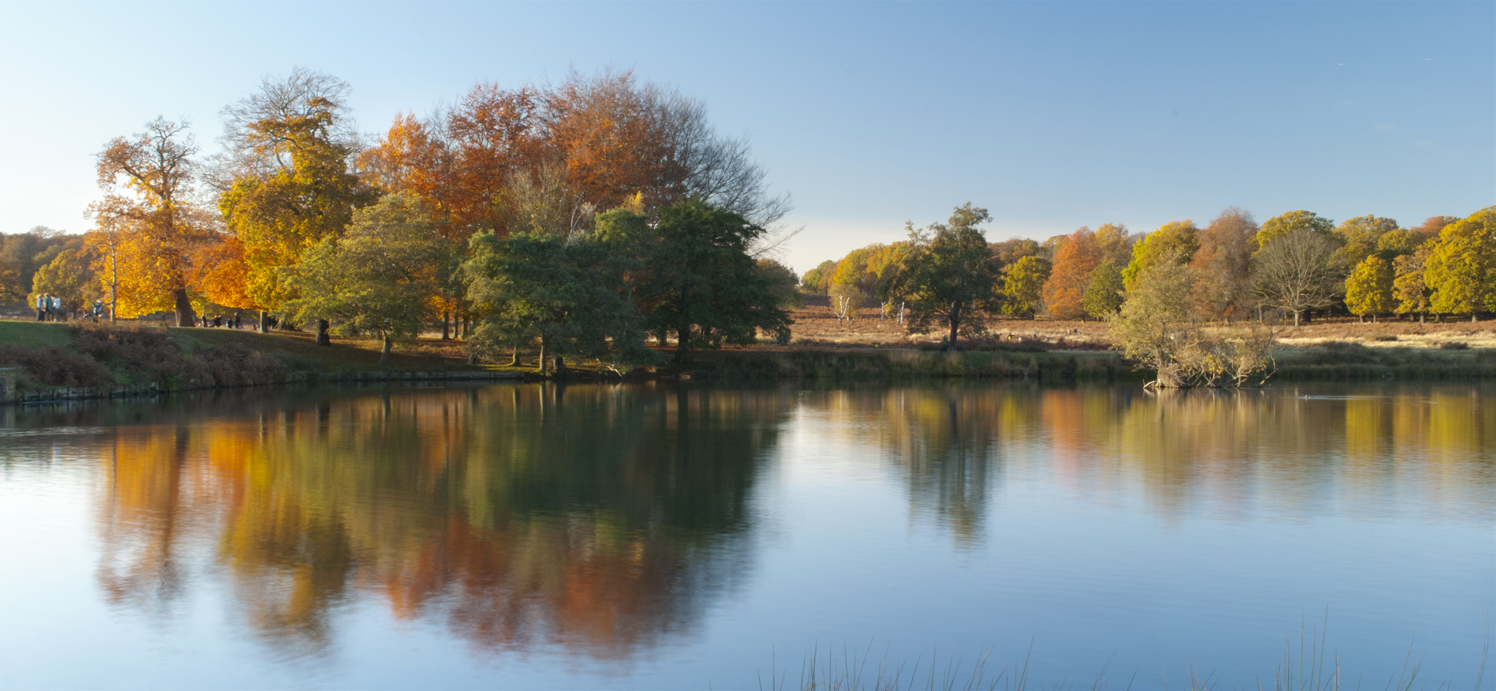 Richmond Park - Photo by Lorenzo Reffo