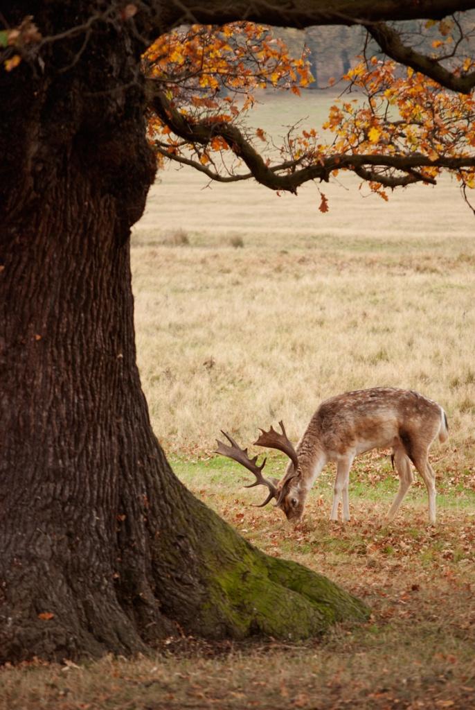 Richmond Park - Photo by Lorenzo Reffo
