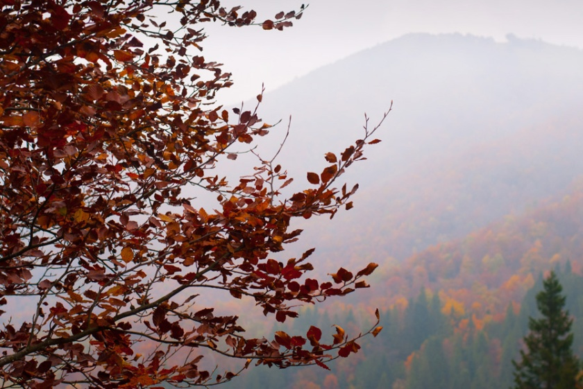 Autunno all'Oasi Zegna - Photo by TheLondonHer